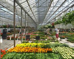 BATILOOK LUDO & JAS - Bassins de jardin